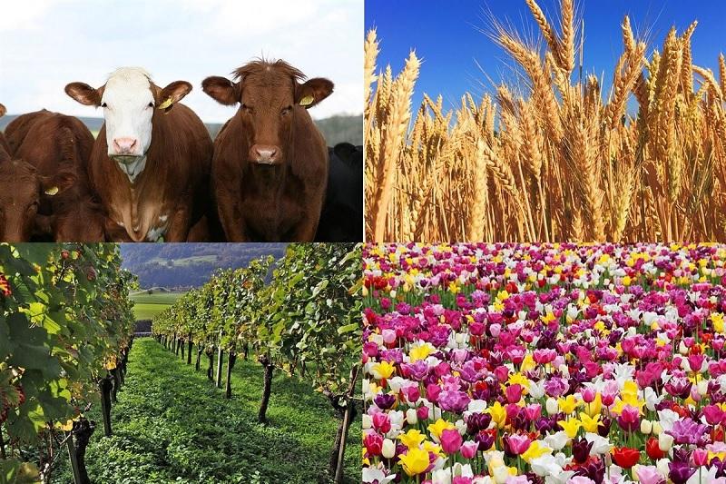 poljoprivredauniverzalna